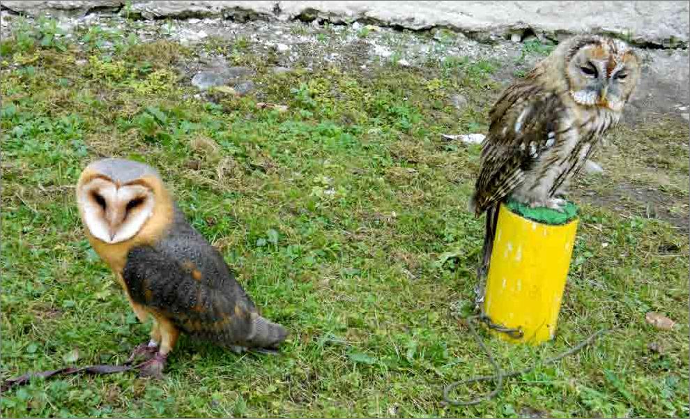 Mexické veľké vtáky