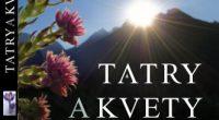kvety-a-tatry